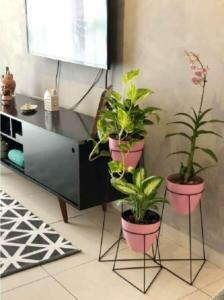 decorações com plantas?