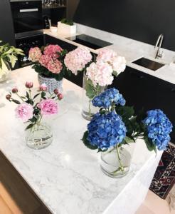 Vasos de planta na cozinha