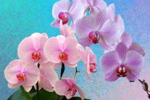 cuidar das orquídeas