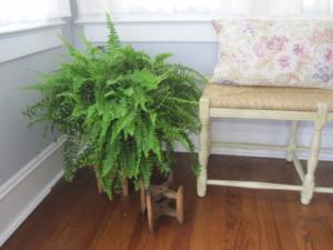 plantas que sobrevive no escuro