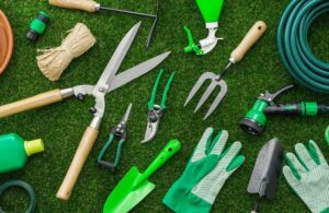 cuidados básico com jardim