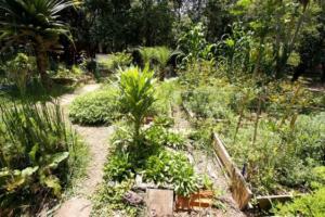 horta comunitária