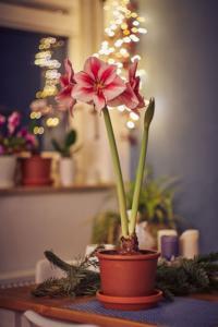 Flor amarilis