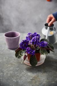 plantas em casa